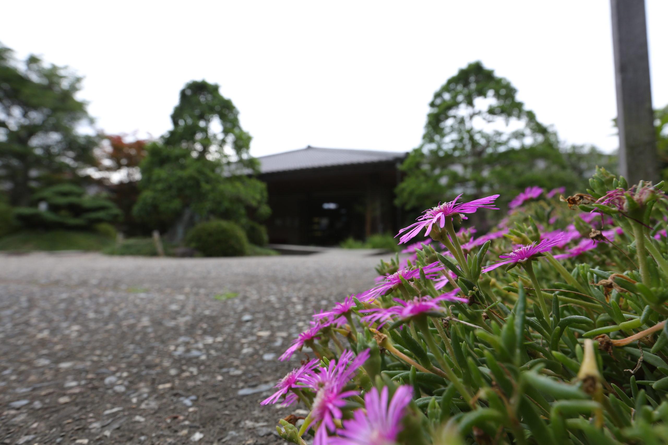 色鮮やかな夏のお花がお出迎え。